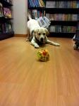 Pepe si diverte in Libreria con Tata.
